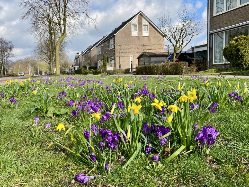 Foto 2. Voorjaar in het dorp. Foto: Wim Arns