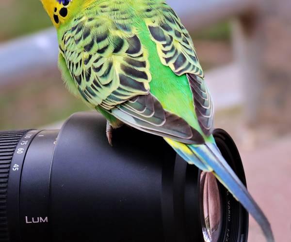 Thema dieren luidt fotowedstrijd 'Het mooiste kiekje' in
