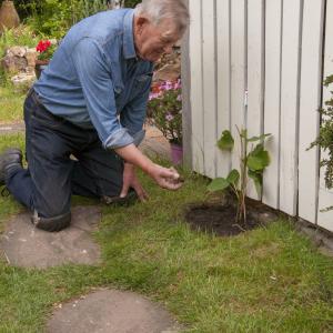 Een truffel uit eigen tuin