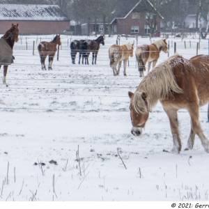 Koning Winter regeert met koude pracht over Wierden