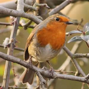 Vogels kijken en tellen met IVN